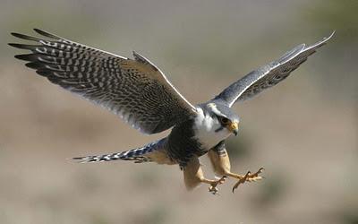 Falcon-04
